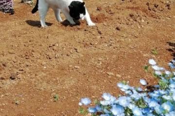 一只猫正在拉野屎被当场逮住