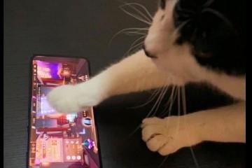 网友让猫咪帮助在游戏里抽奖它真的抽中了好卡猫快犒赏我